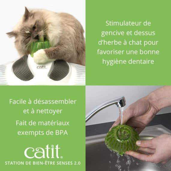 Station de Bien Être Senses 2.0 Catit – Stimulateur de gencive et dessus d'herbe à chat pour favoriser une bonne hygiene dentaire. Facile à disassembler et à nettoyer. Fait de matériaux exempts de BPA