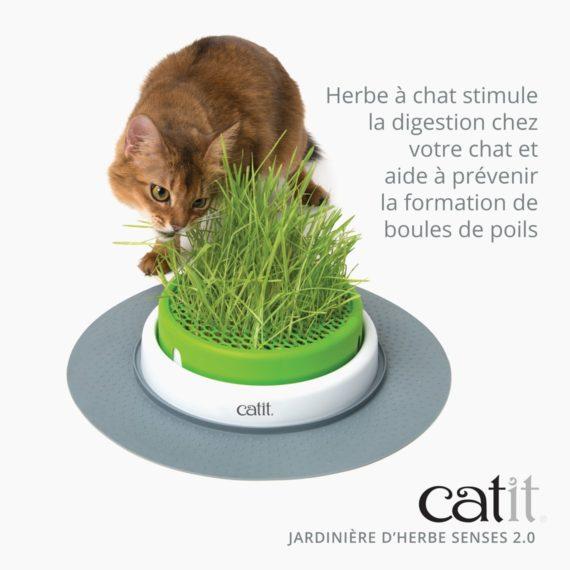 Jarinière d'herbe Senses 2.0 Catit stimule la digestion chez votre chat et aide à prévenir la formation de boules de poils