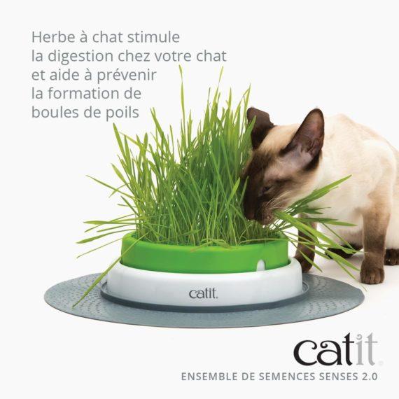 Ensemble de semences Senses 2.0 Catit stimule la digestion chez votre chat et aide à prévenir la formation de boules de poils