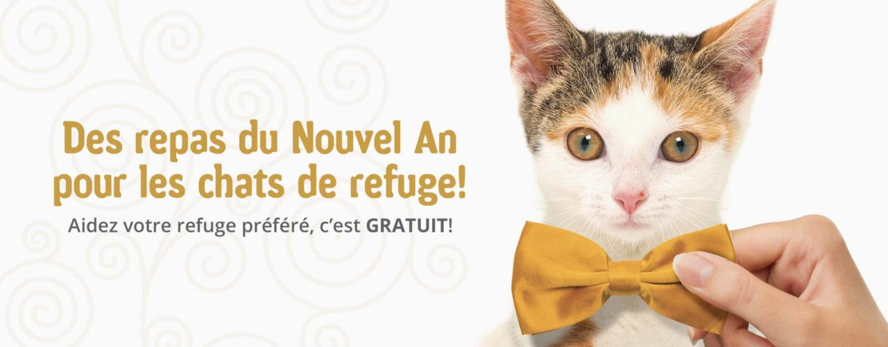 De repas du Nouvel An pour les chats de refuge!